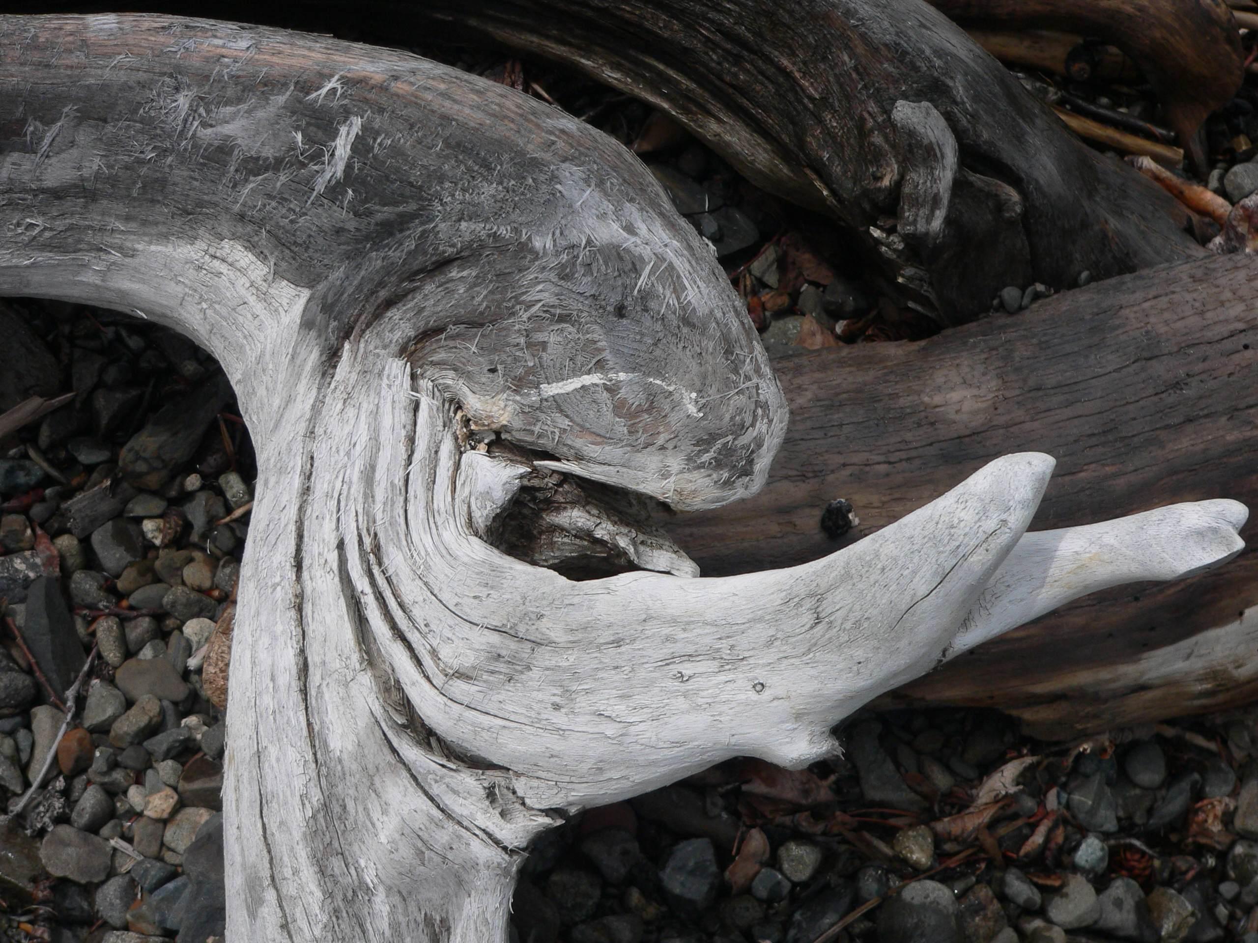 Driftwood face.jpg