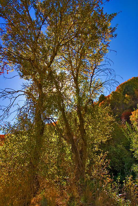 Sardine Canyon Back Lighting