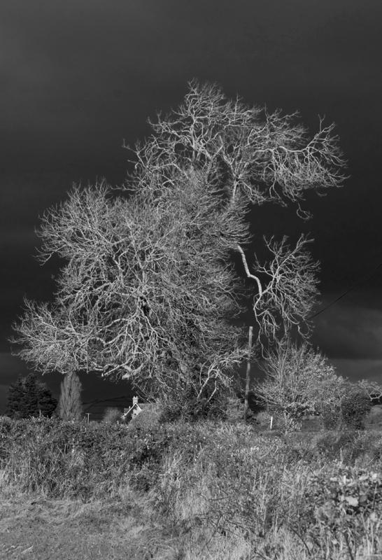 Tree and Dark sky