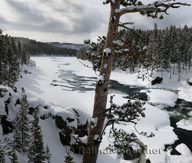 192 Yellowstone River P.jpg