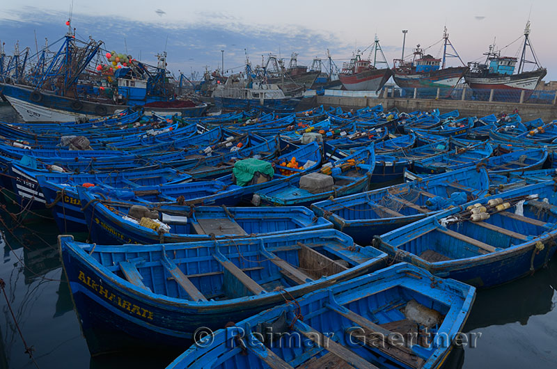 Sea of blue boats at early dawn in the marine port of Essaouira Morocco