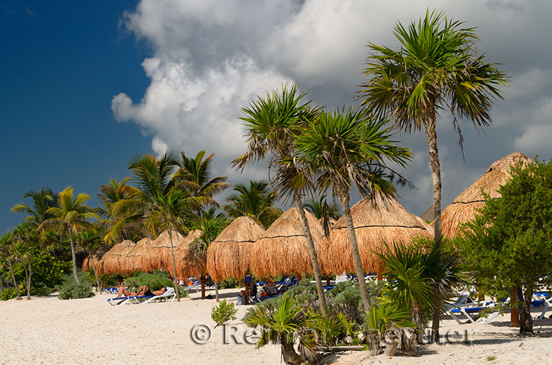 276 Palm trees 2.jpg