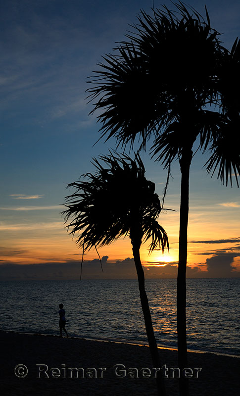 276 Palm trees 7.jpg