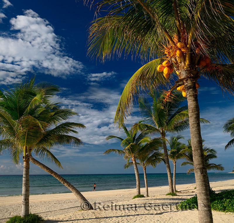 276 Palm trees 12.jpg