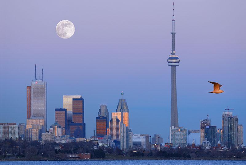 105 Moonrise Toronto with seagull 1.jpg