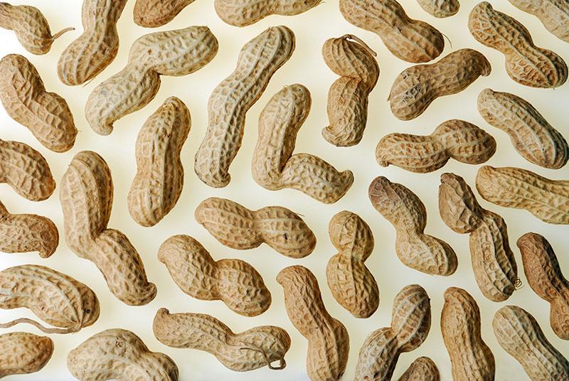 109 Peanut wallpaper.jpg
