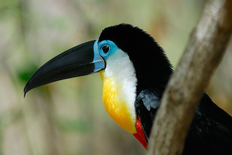 113 toucan.jpg