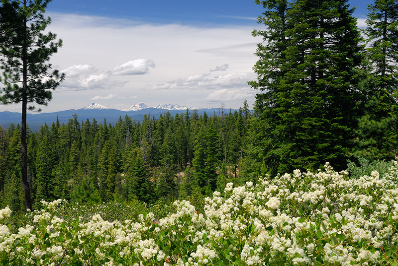 128 Cascade mountains from Newberry Crater.jpg