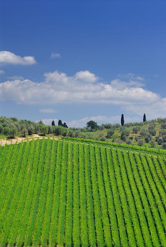 137 Tuscan Hills 3.jpg
