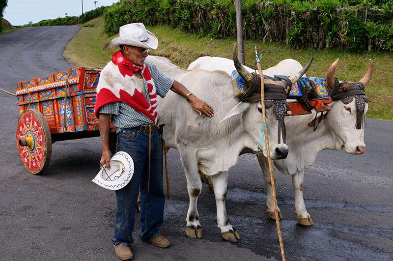 158 Oxen and cart 1.jpg