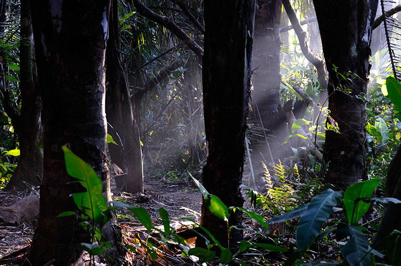 162 Rain Forest Morning light.jpg