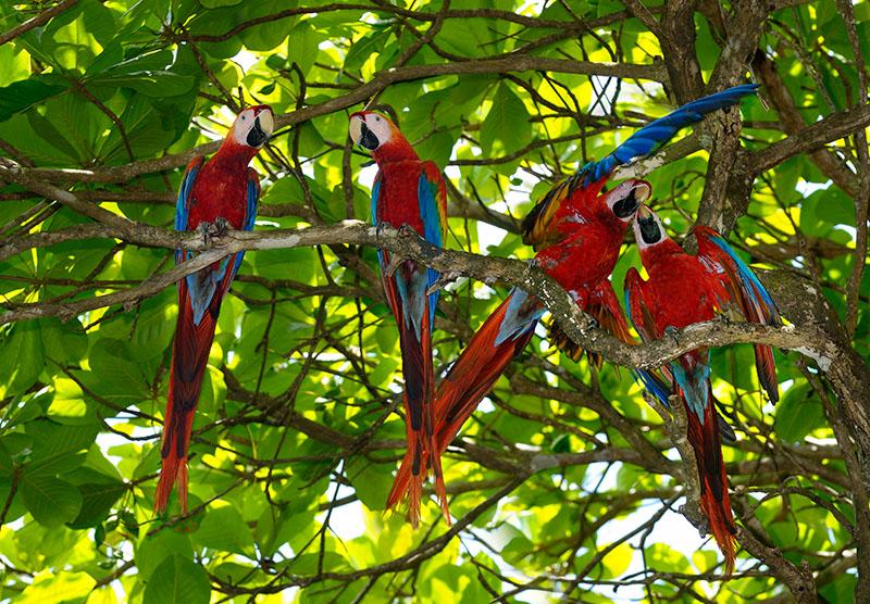 163 Wild Macaws 1.jpg