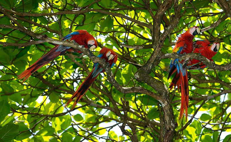 163 Wild Macaws 2.jpg