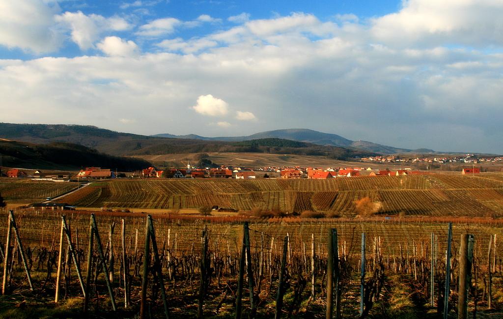 Blienschwiller  vineyard