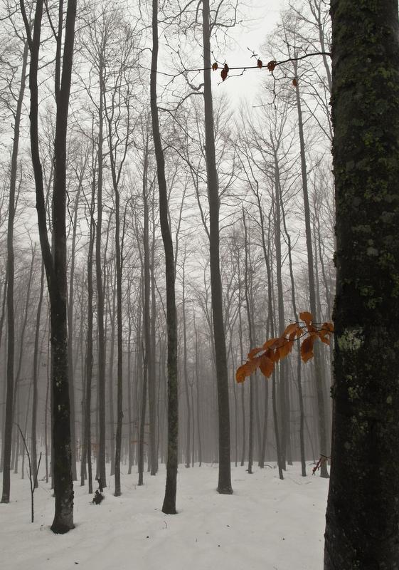 froid et brumeux