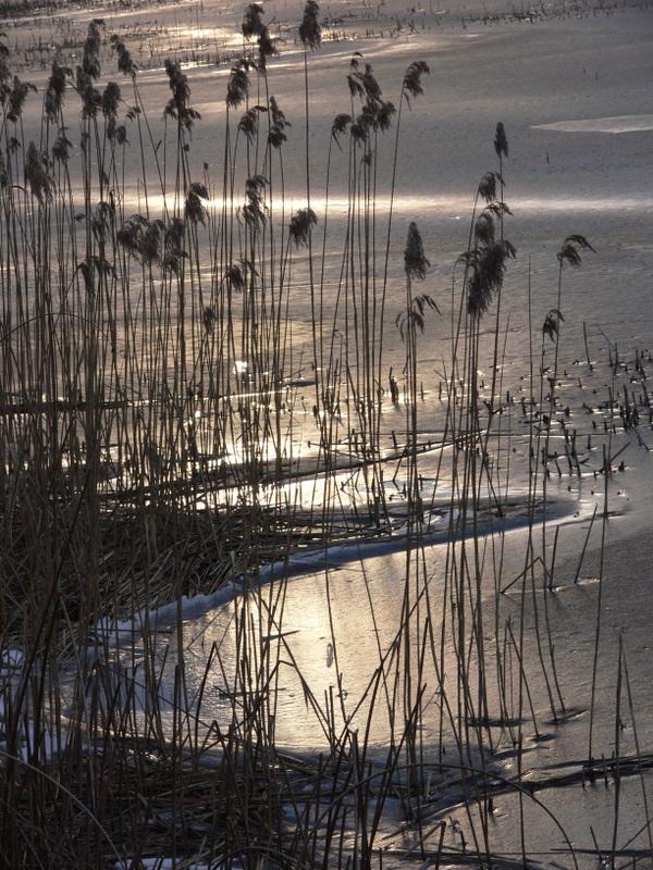 le lac de Remoray