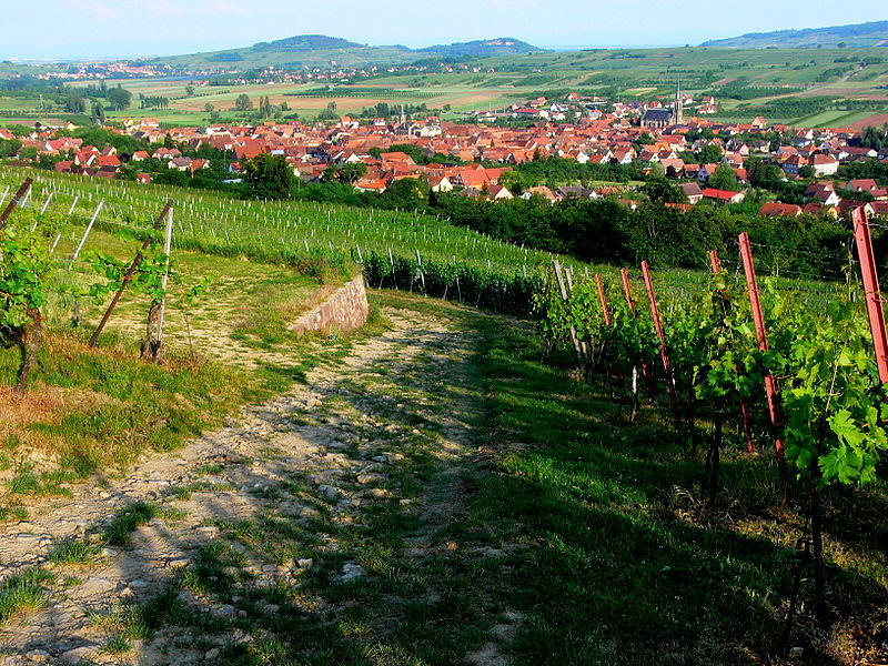 Alsace- Westhoffen.