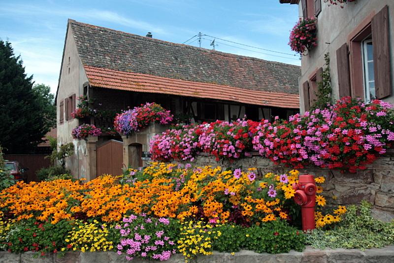 summer in Alsace.