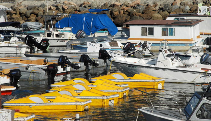 A commanding color!