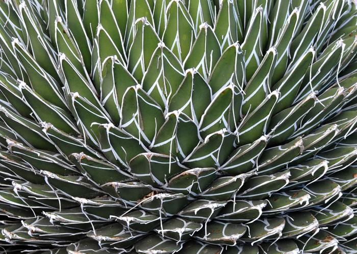 Close-up of Cactus-type plant