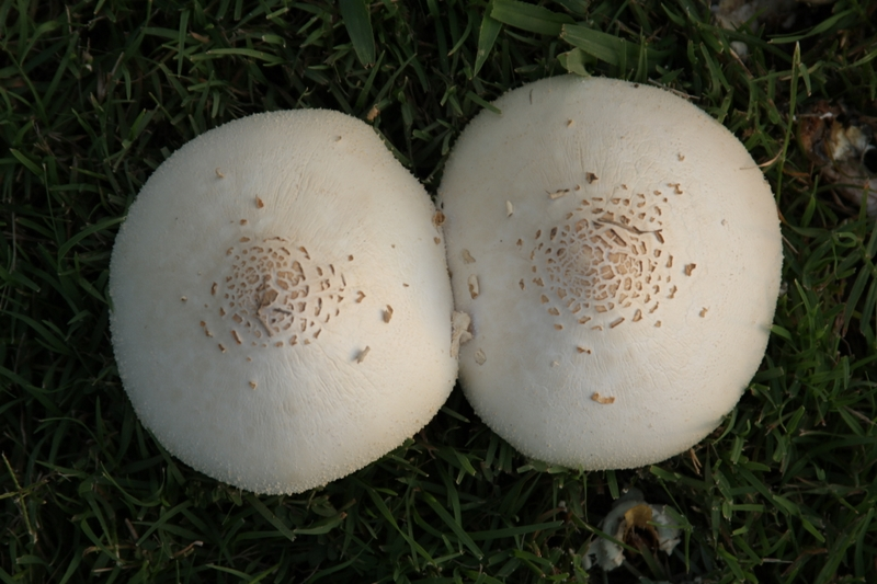 Isnt this the breast photo of shrooms youve ever seen?!