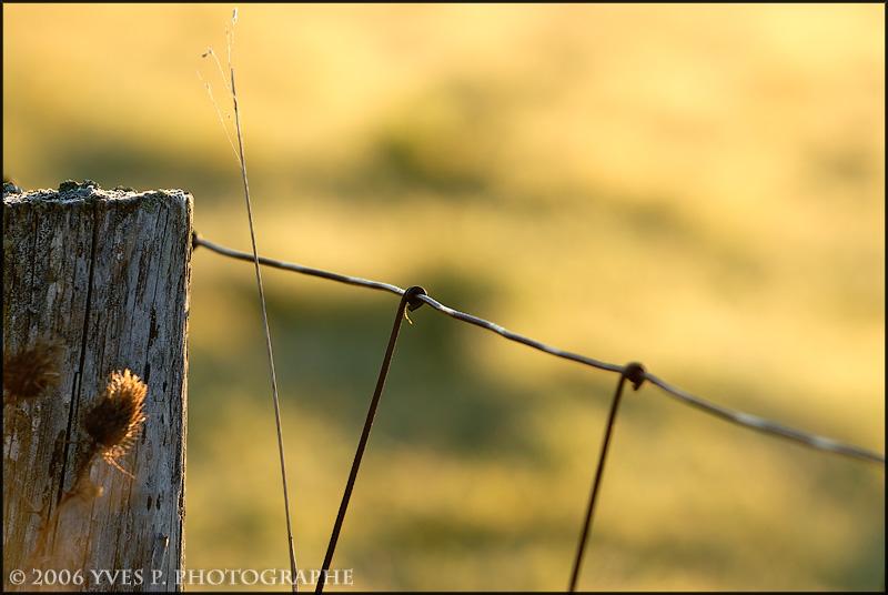 Fence ...