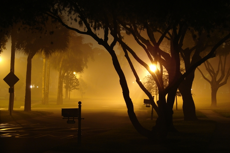 Fog Down the Street