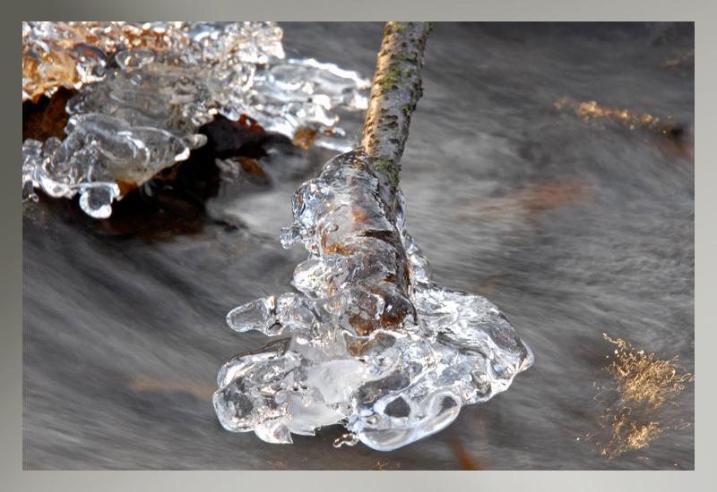 winter  frozen branche ice
