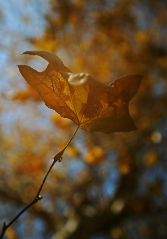 A Season of Gold