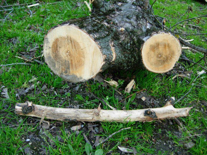 wood -cut-er