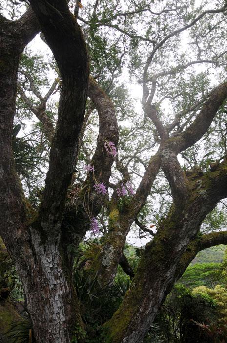 Hawaii 2008-142