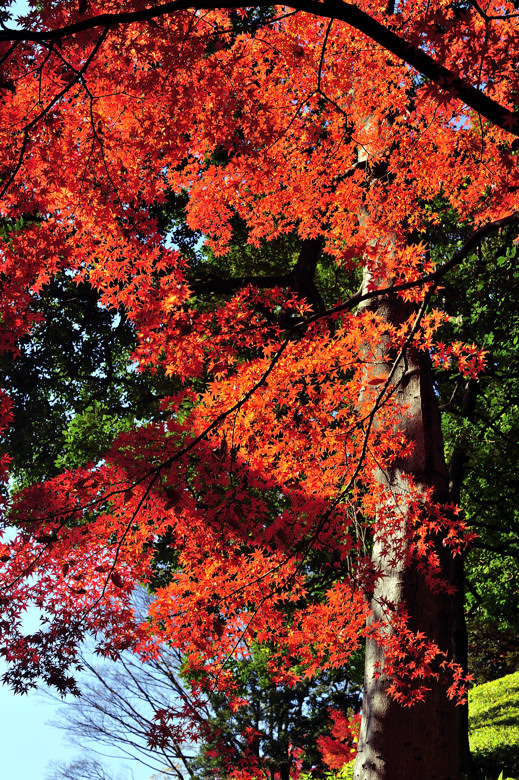 A Tree is a Tree...