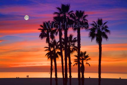 California Palms Moonlight