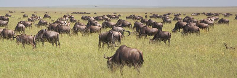 Serengeti pano 2.jpg