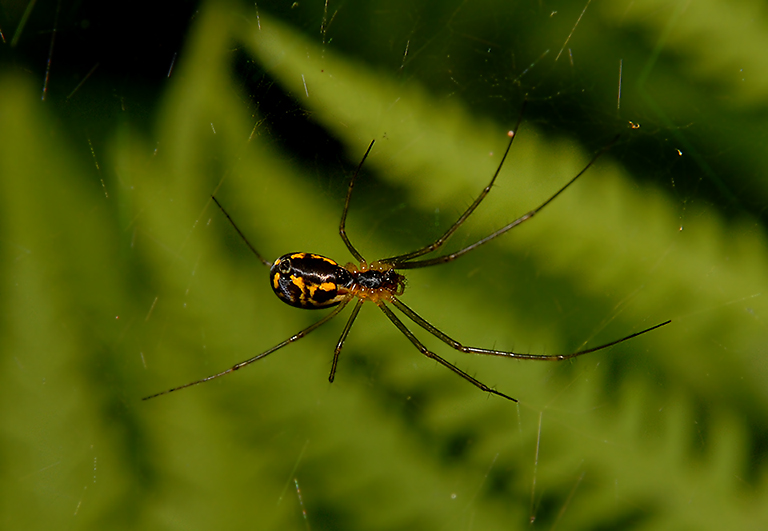 Sheet Web Weaver