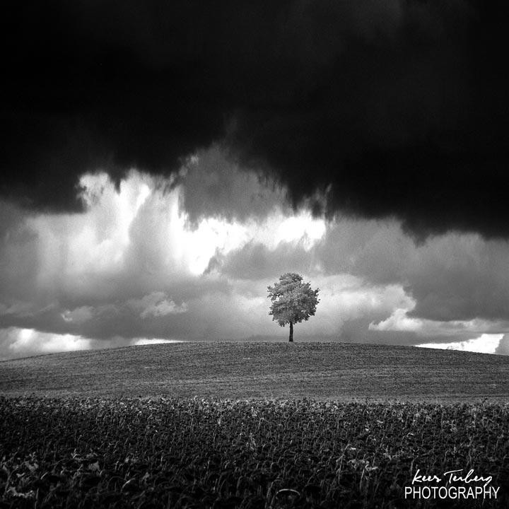 tree-IR.jpg