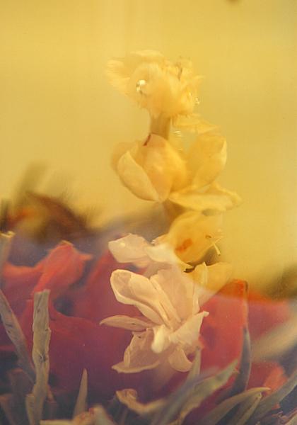 Jasmine Tea Bloom