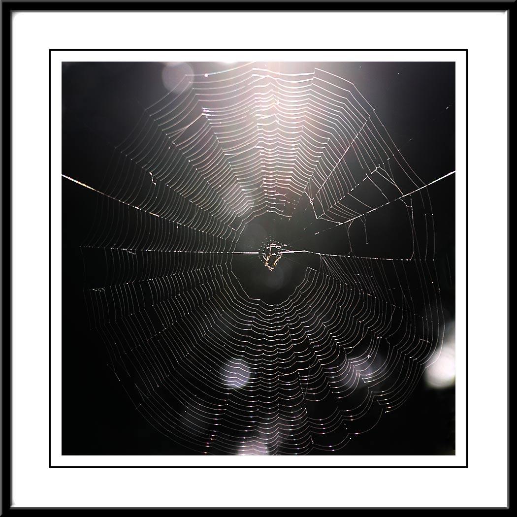 Backlit spider web.jpg