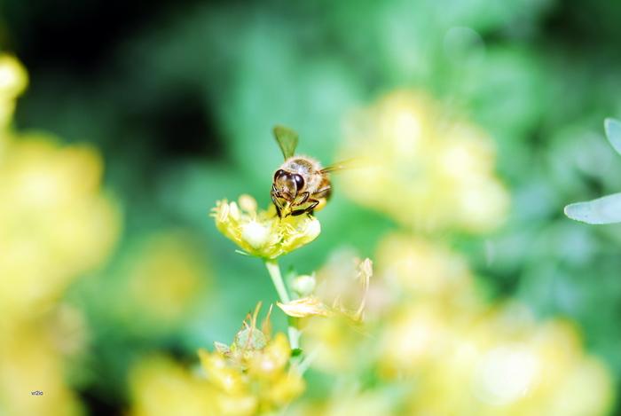flower-108.jpg