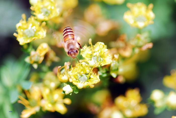 flower-131.jpg