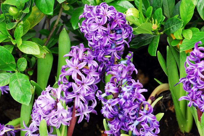 flower-135.jpg