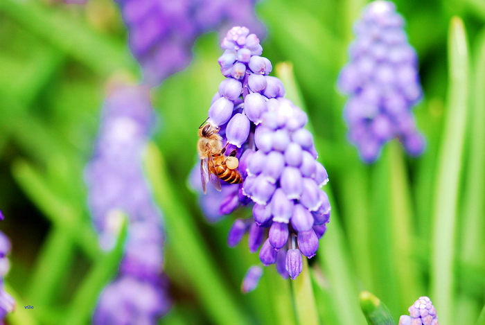 flower-137.jpg