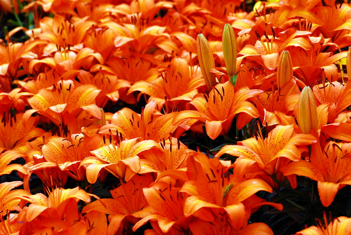 flower-139.jpg