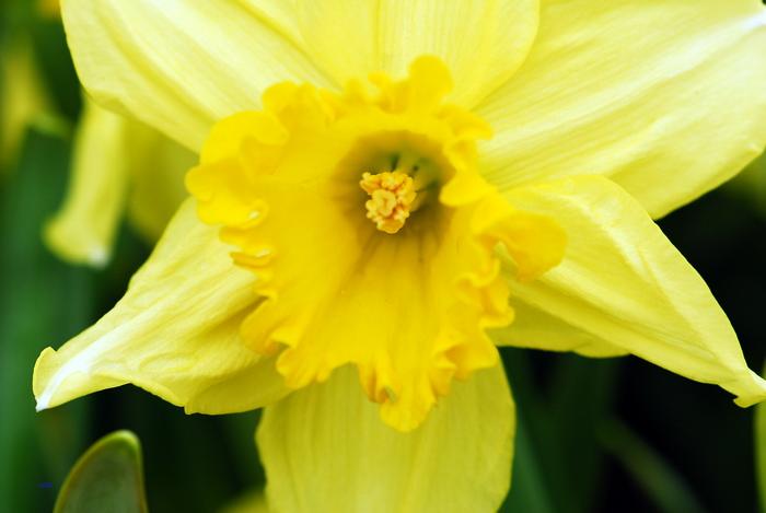 flower-142.jpg