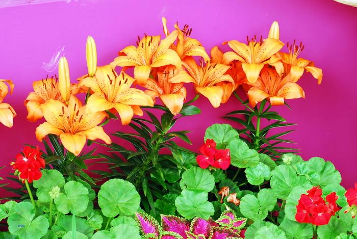 flower-144.jpg