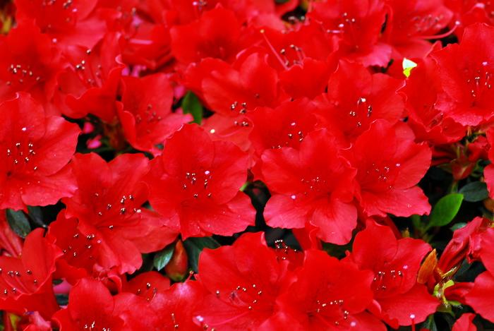 flower-145.jpg