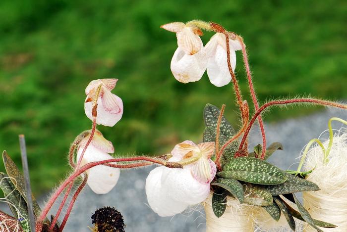 flower-147.jpg