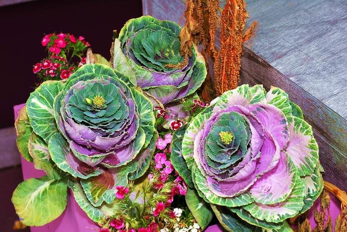 flower-155.jpg