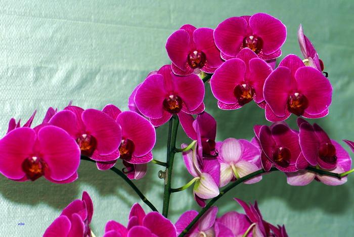 flower-170.jpg