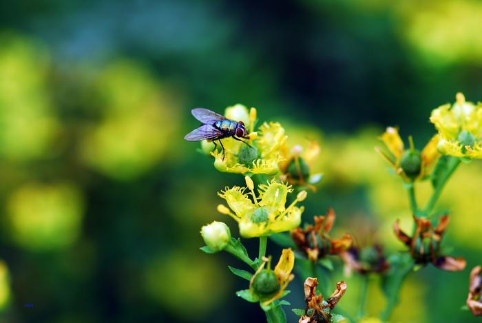 flower-70.jpg